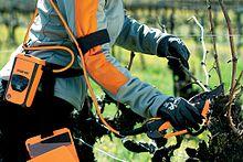 sécateur électrique sur harnais pour viticulteur