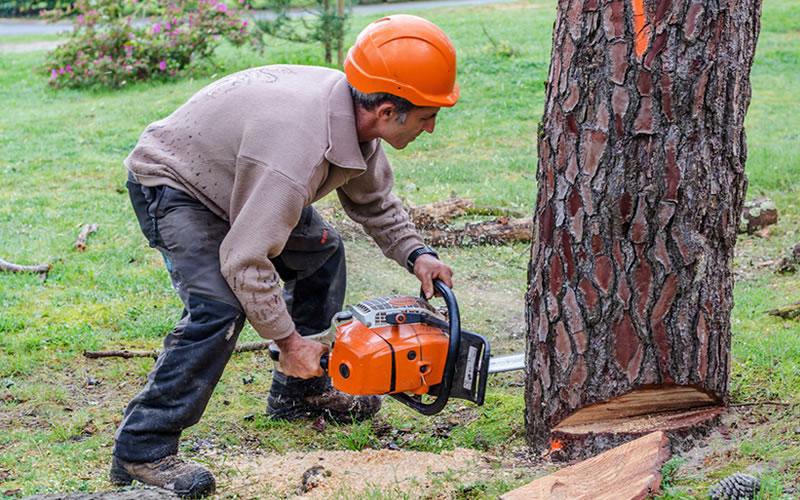 homme abat un arbre avec tronçonneuse