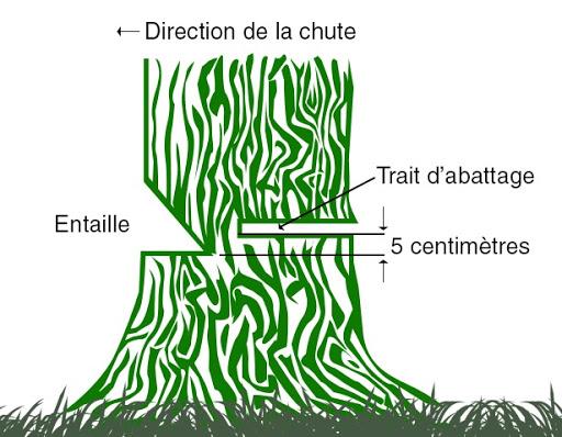 abattre un arbre de gros diamètre